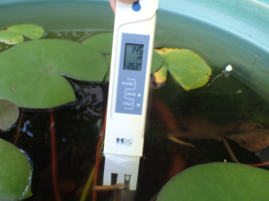 ECメーター(aquapro AP-2)で水槽の水質を検査している様子