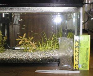 水槽に水草を追加した様子