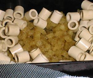 水槽をセットアップして19日目 洗車スポンジ濾材の様子