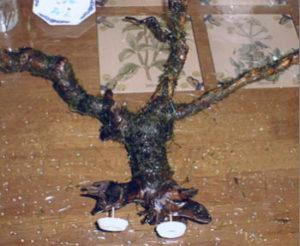 流木にウィローモスを乗せて釣糸を巻いた様子