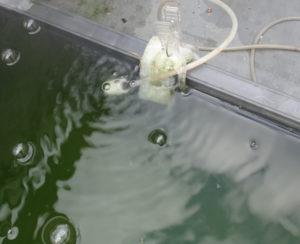 水面エアレーションの例
