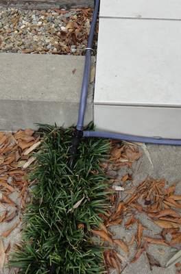 灌水チューブ入口の配管の様子
