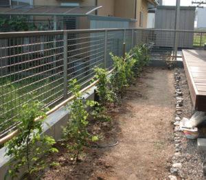 トキワマンサクのポット苗を植えた例