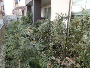 庭木を皆伐して出た大量の剪定ゴミ