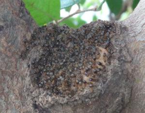 アルミカバーの下にアリが集まっている様子