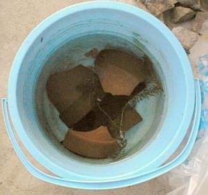 バケツに水と植木鉢の破片を入れて草食魚用の餌を作っている様子