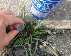 雑草にペイント薄め液をかけている様子