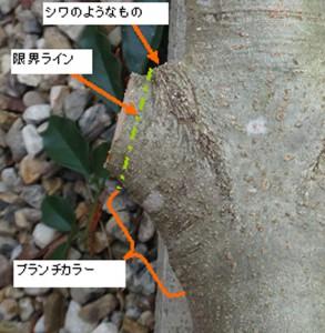太枝のカット位置
